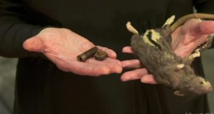 cia-museum-curator-shows-rodent-tradecraft-cia-museum